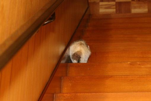 階段を全力で下りるモモちゃん♪