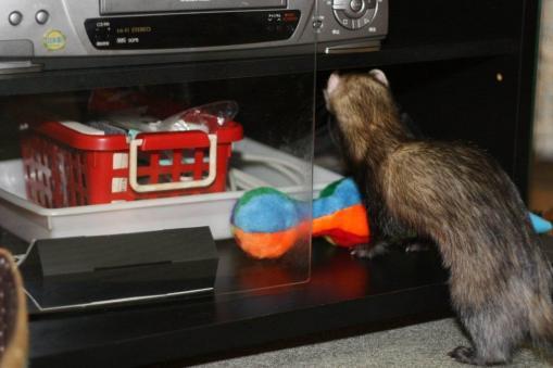 おもちゃを隠す♪