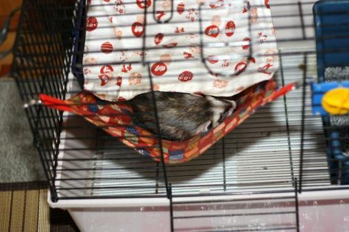 ふみちゃんハンモで寝んねのジャック1