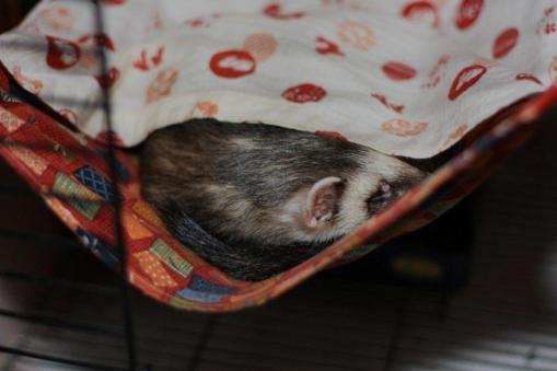 ふみちゃんハンモで寝んねのジャック2