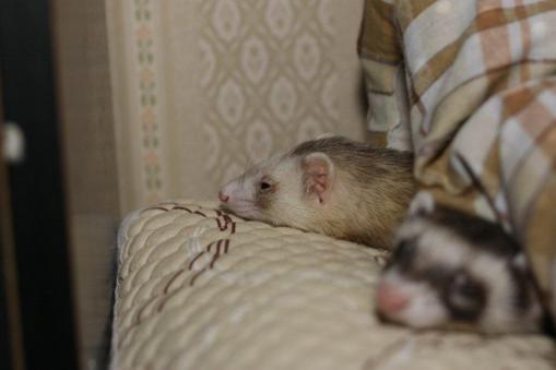いつも一緒に寝んね2