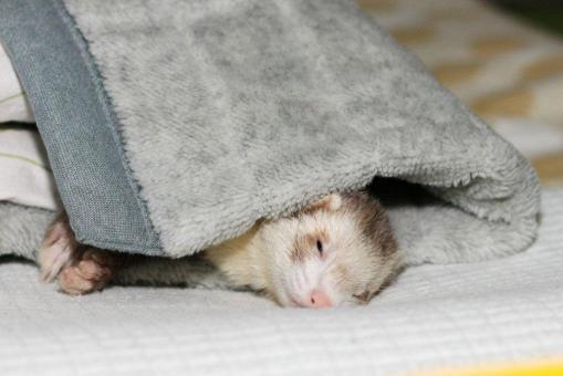 枕元でまったりのモモちゃん♪2