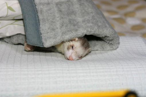 枕元でまったりのモモちゃん♪1