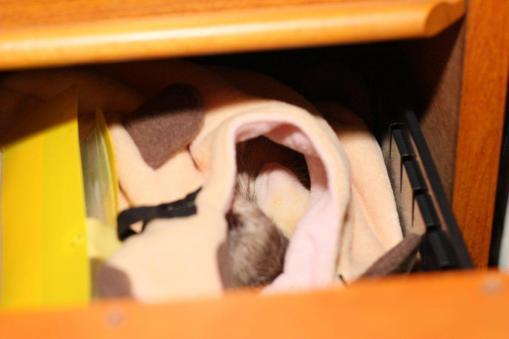 寝袋で寝んねのモモちゃん3