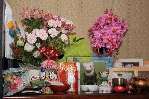 モモちゃんに頂いた花