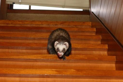 階段を下りるジャック