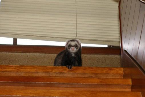 階段から見下ろすジャック のアップ