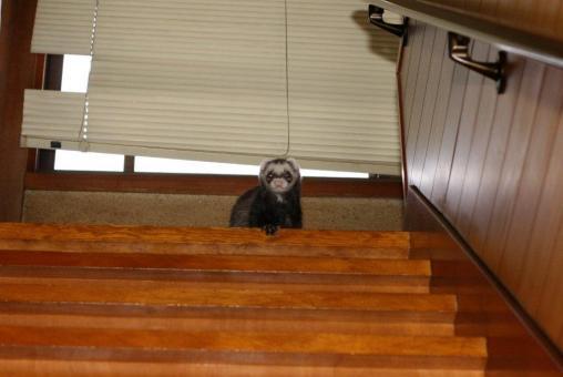 階段から見下ろすジャック
