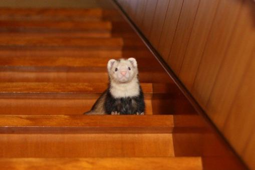 階段を下りるマルコ2