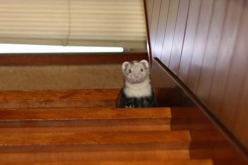 階段を下りるマルコ1