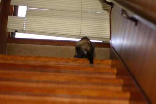 階段を上るマルコ2