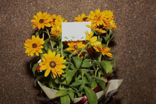 スジャスジャータ様から頂いたお花