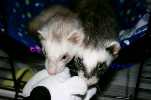 ジャック君とモモちゃん(365日カレンダー)
