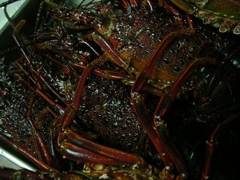 2010_0106_180502-DSCN4274.jpg
