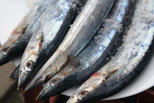 20100912生秋刀魚