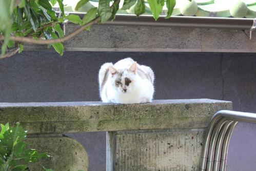 20101102猫
