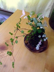 2011_0609三日月豆0006