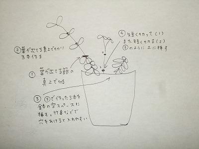 2011_0804三日月豆0001