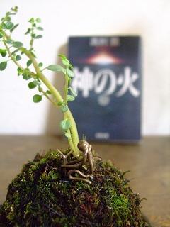 2011_0821三日月豆0021