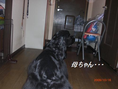 001_convert_20091018134637.jpg