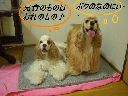 004_convert_20110712224101.jpg