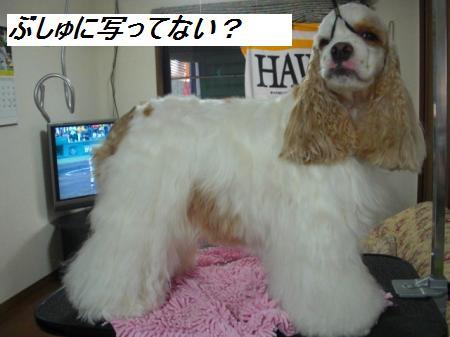 006_convert_20110816153109.jpg