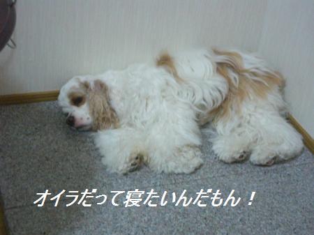 013_convert_20110920195952.jpg