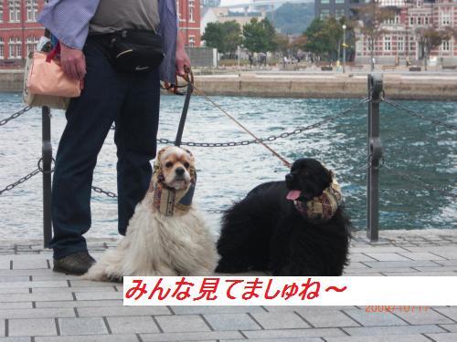 021_convert_20091022190943.jpg
