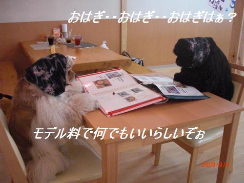030_convert_20090904233729.jpg
