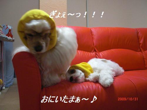 035_convert_20091102234342.jpg