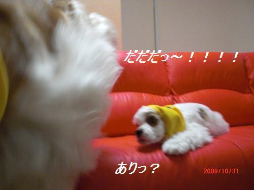 036_convert_20091102234534.jpg