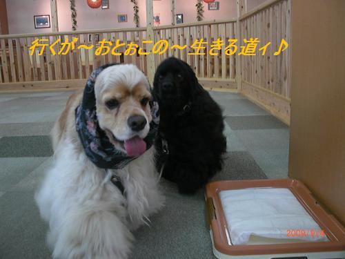 041_convert_20090904235637.jpg