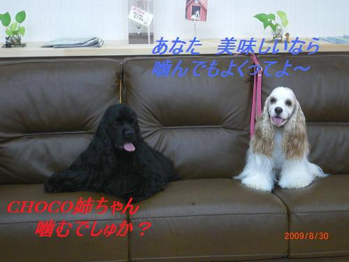 054_convert_20090830210315.jpg