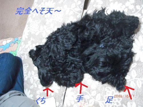 125_convert_20091021233158.jpg