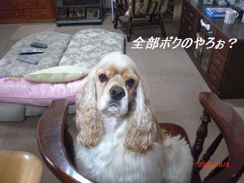 471_convert_20091006113621.jpg