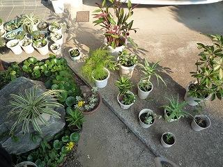 多肉植物の日光浴