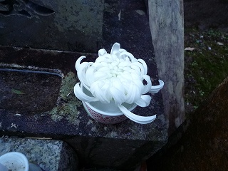 墓参り菊花
