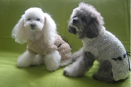 KOKOS DOG Style