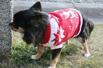 犬服屋KOKOS kyoto