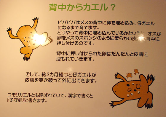 DSC_8998.jpg