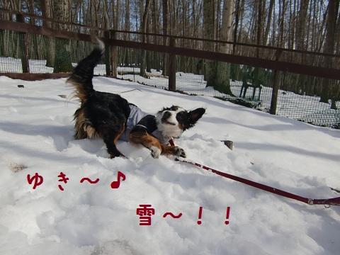 雪の世界2