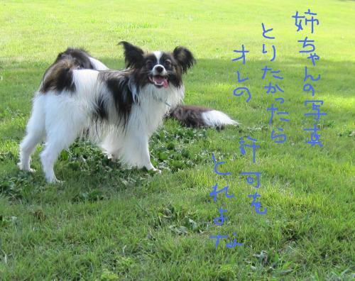IMG_1616_convert_20100809073735.jpg