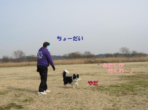 IMG_2634_convert_20110115184022.jpg