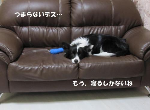 IMG_2763_convert_20110209214229.jpg