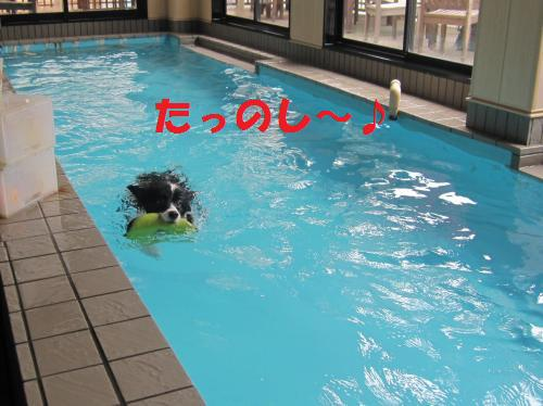 IMG_2983_convert_20110402190320.jpg