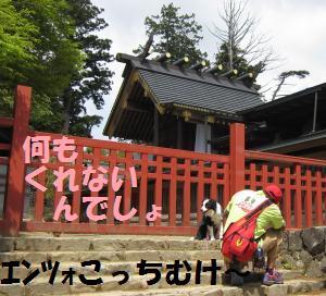 IMG_3334_convert_20110505135814.jpg