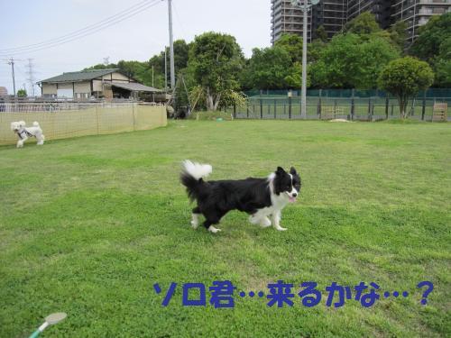 IMG_3381_convert_20110507212844.jpg