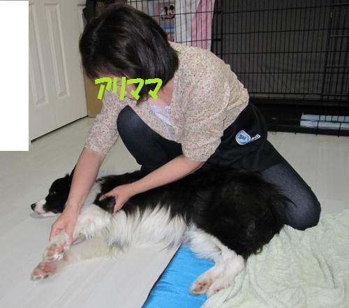 IMG_3673_convert_20110523170325.jpg