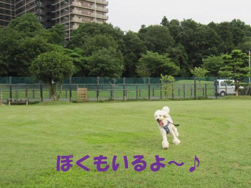 IMG_3743_convert_20110619185511.jpg
