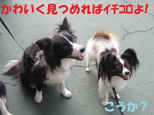 IMG_4983_convert_20111010103804.jpg